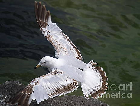 Fly With Me by Irfan Gillani