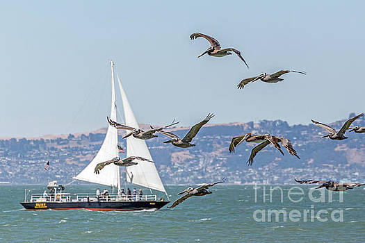 Flyby by Kate Brown