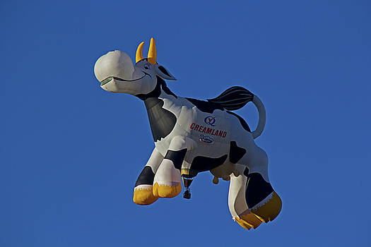 Flying Cow by Tom Winfield