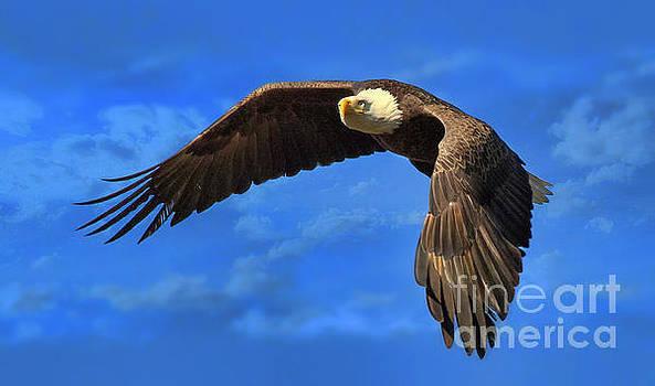 Flying Eagle by Geraldine DeBoer