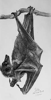 Flying Fox by Sarah Mushong