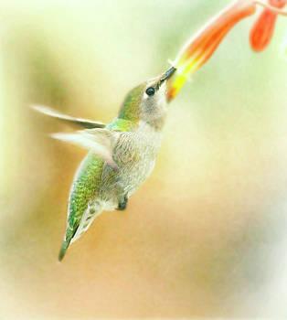 Flying free hummingbird by Ruth Jolly