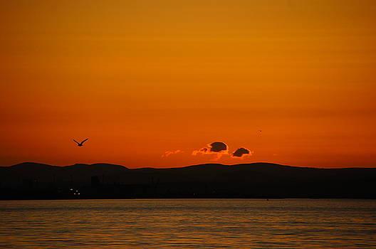 Flying Home by Nik Watt