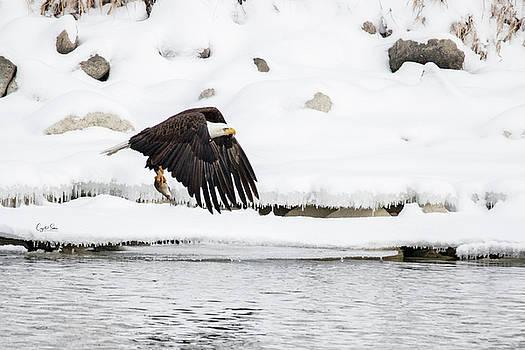 Flying in snow by Crystal Socha