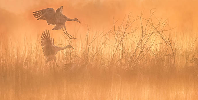 Flying Into The Light And Fog by Kelly Marquardt