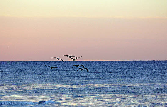 Debbie Oppermann - Flying Low At Manasota Key