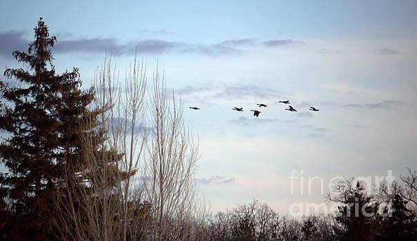Flying North by John Scatcherd