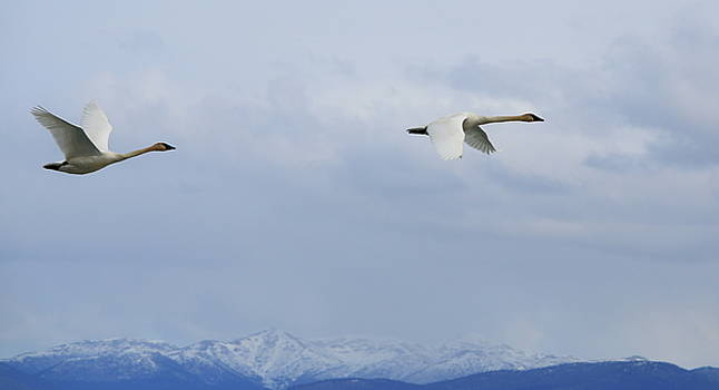 Flying over the Mountains by Kimberly VanNostrand