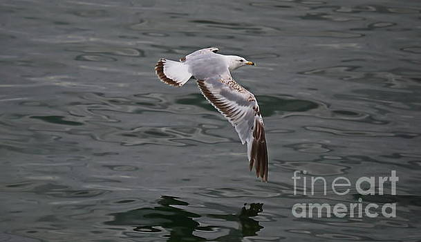 Flying Over Water by Irfan Gillani