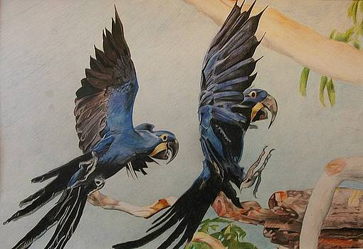 Flying Parrots by Bennie Parker