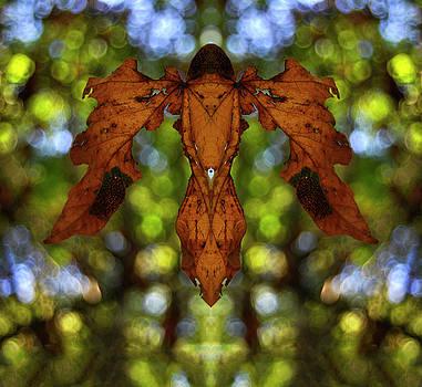 Pelo Blanco Photo - Flying Phyllium