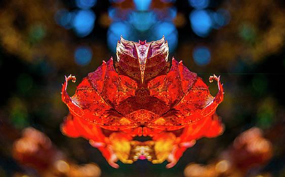 Pelo Blanco Photo - Flying Red Phyllium