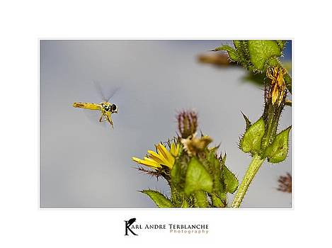 Flying the wild garden by Karl Terblanche