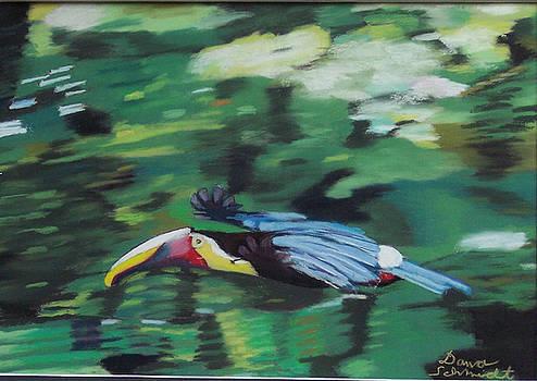 Flying Toucan in Costa Rica by Dana Schmidt