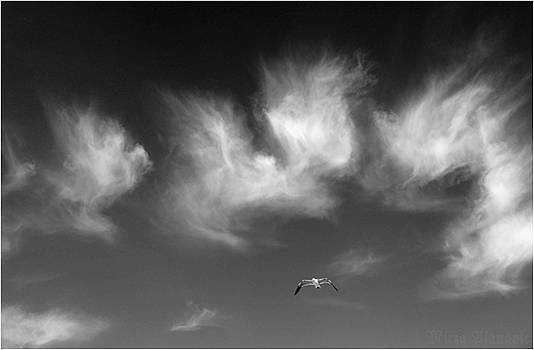Flying with Angels  by Mirza Ajanovic