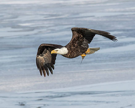 Flying with fish by Crystal Socha