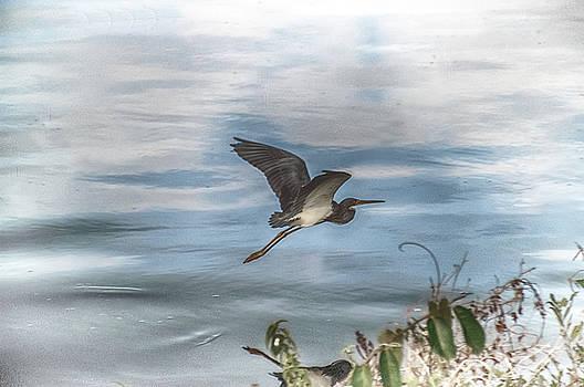 Flyover by Judy Hall-Folde