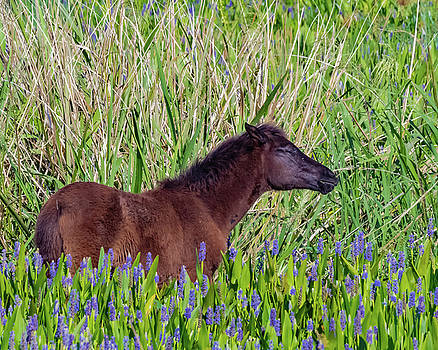 Foal Grazing  by Joseph Caban