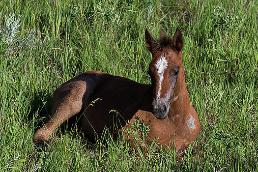 Foal in Grass by John Daly