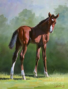 Foal Study by Jeanne Newton Schoborg