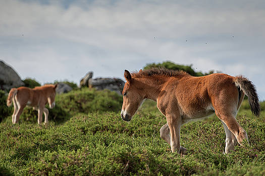 Foals by David Garcia Eirin