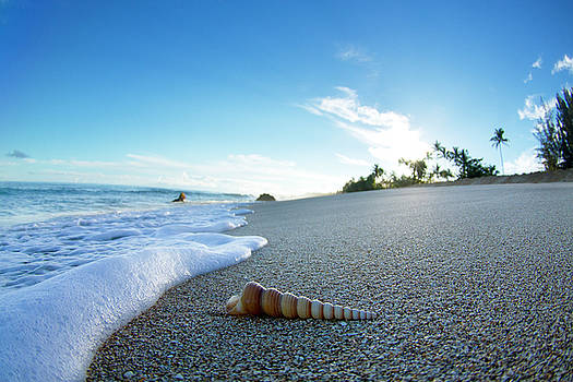 Foam and Twisty Shell. by Sean Davey