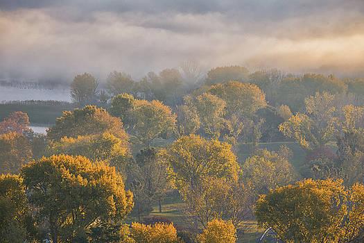 Marc Crumpler - Fog Above Trees at Sunrise