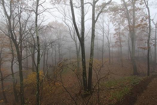 Fog by Alexa Gurney
