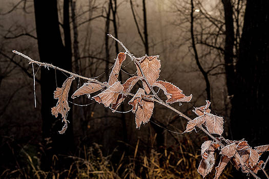 Fog and Frost by Annette Berglund