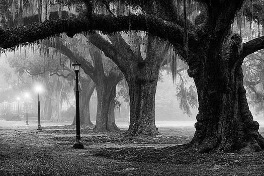 Fog and Oaks by David Morel