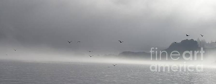 Fog by Barbara Henry