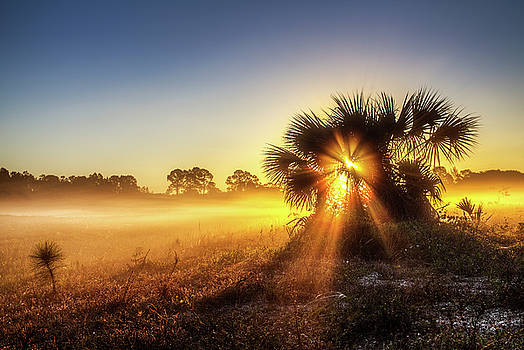 Fog Burst by Steve Augulis