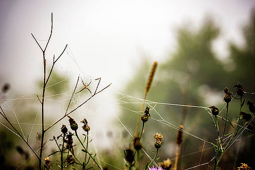 Fog Collector by Christina VanGinkel