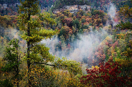 Fog in the Valley by Diana Boyd