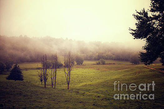 Fog in the valley by Tim Wemple