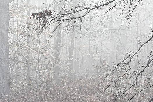Fog in the Woods by JW Hanley