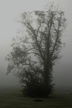 Fog by Karen Harrison