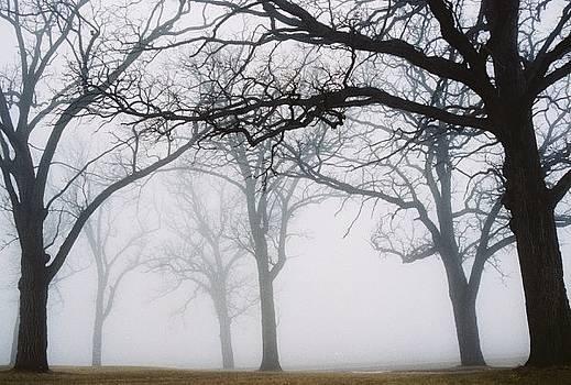 Fog Line by Rochelle Kassens