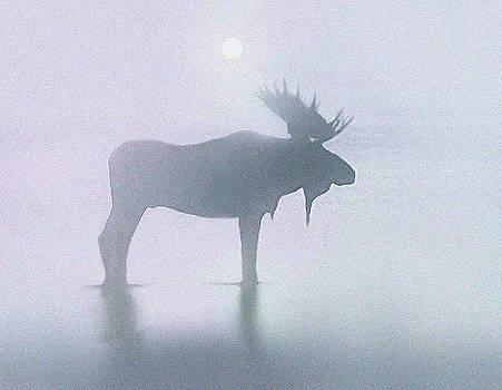 Fog Moose by Robert Foster