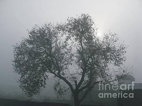 Fog Morning by Bobby Dar
