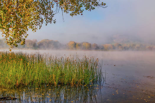 Marc Crumpler - Fog on a Calm Morning