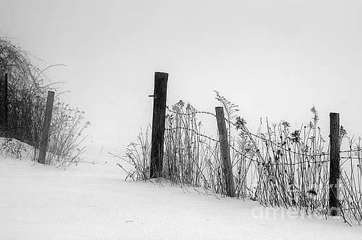 Fog on Snow by Sandra Silva