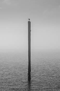 Fog on the Cape Fear River by Willard Killough III