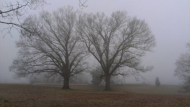 Fog on the Yorktown Battlefield by Liza Eckardt