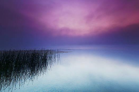 Fog Rising by Kevin Kludy