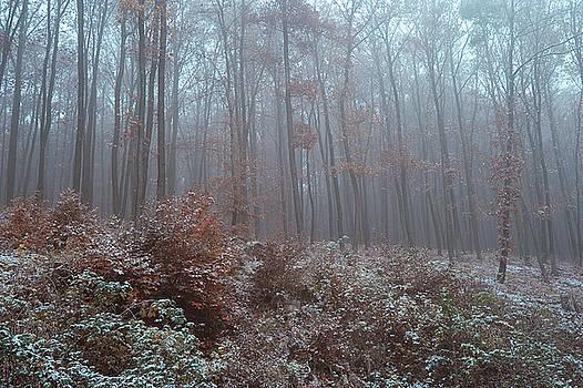 Jenny Rainbow - Fog. In Mysterious Woods