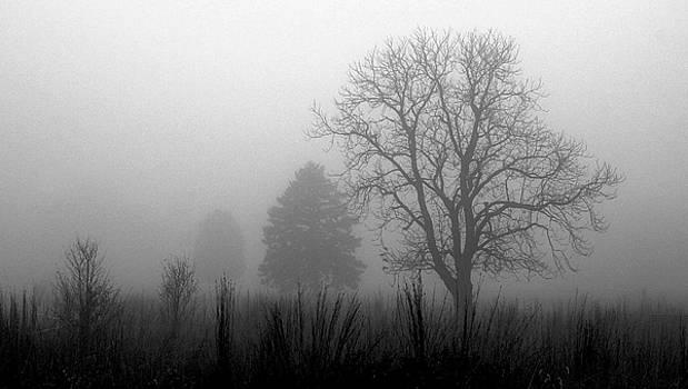 Rosanne Jordan - Fog Simplicity