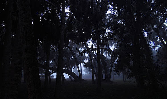 Fog Through the Trees by Phil Penne