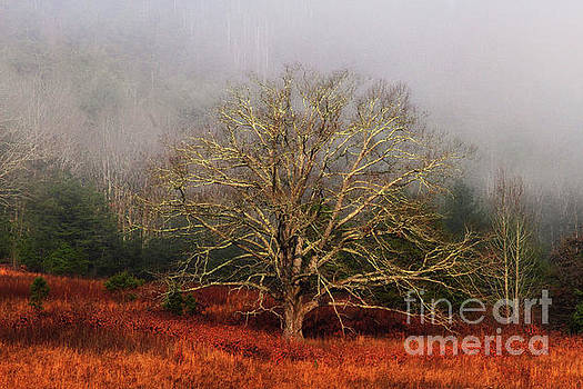 Fog Tree by Geraldine DeBoer