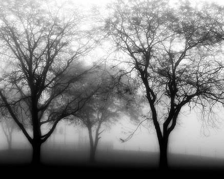 Fogged in by Kim Lentz
